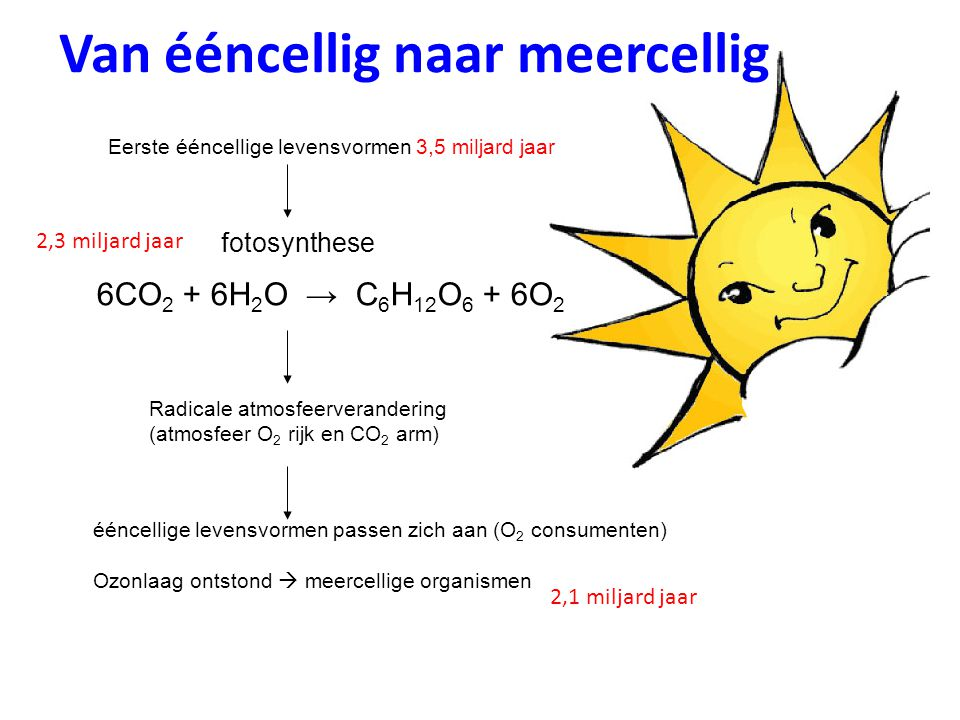 Van ééncellig naar meercellig