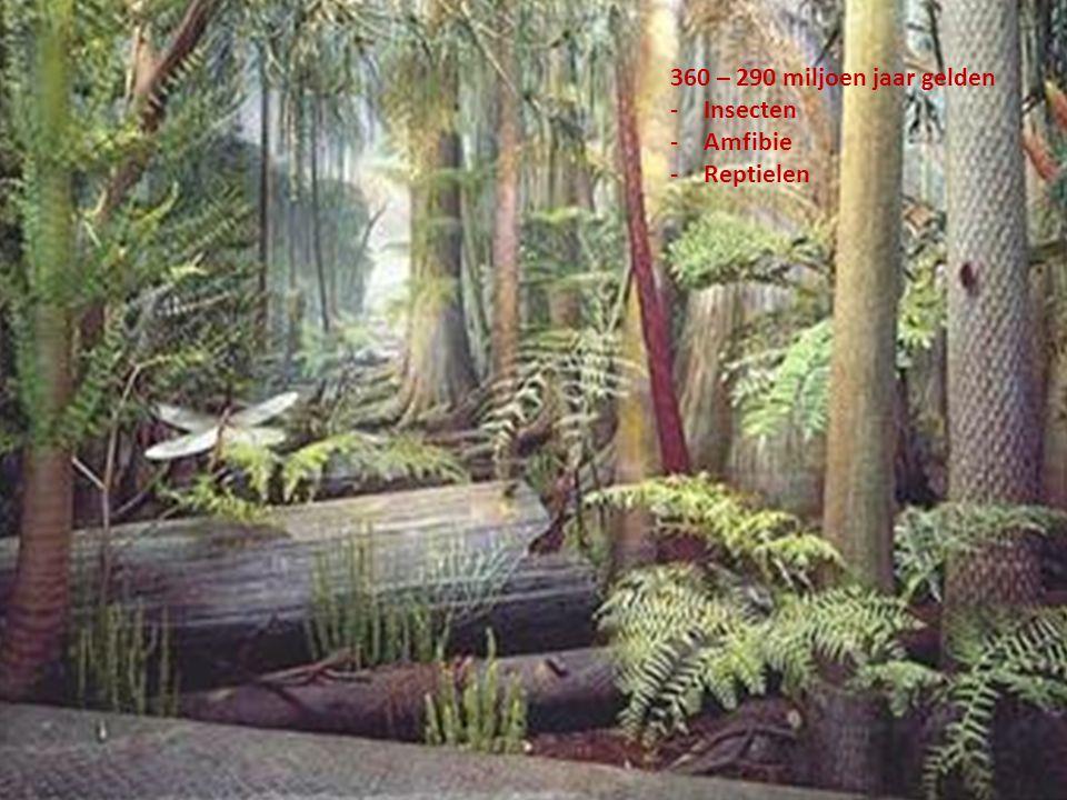 360 – 290 miljoen jaar gelden Insecten Amfibie Reptielen