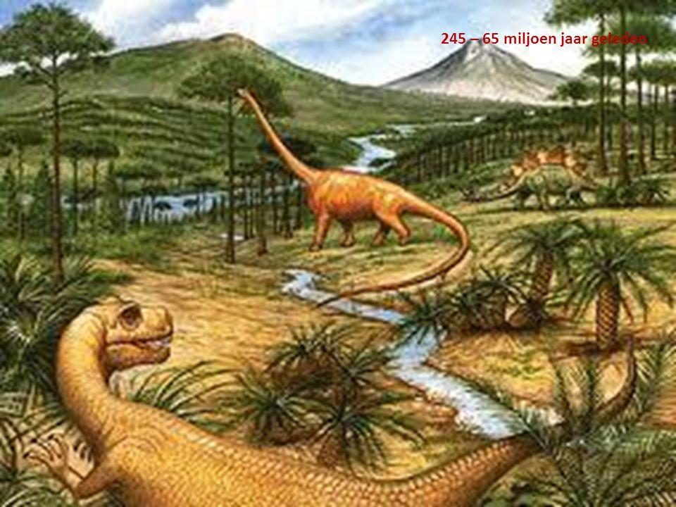 245 – 65 miljoen jaar geleden