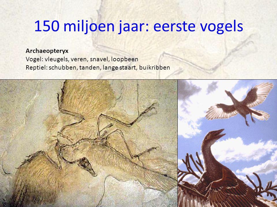 150 miljoen jaar: eerste vogels