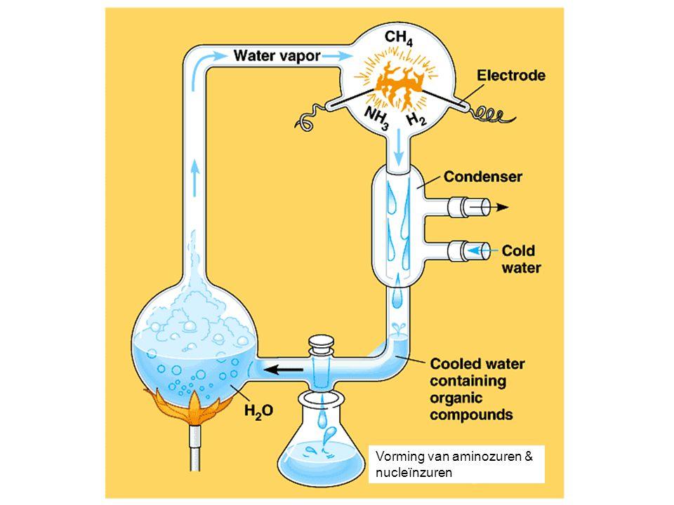 Vorming van aminozuren &