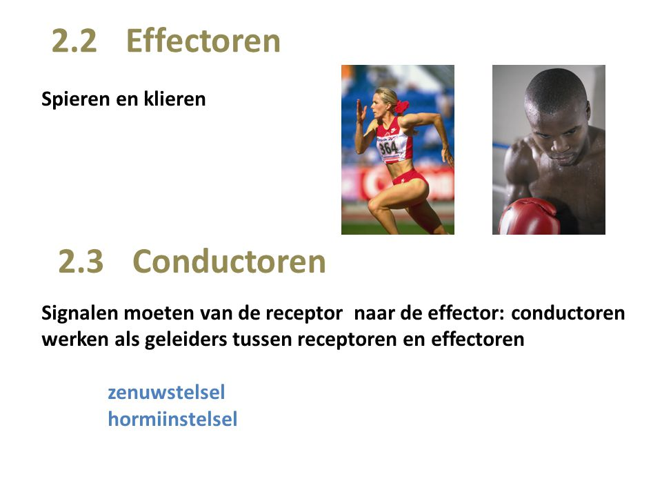 2.2 Effectoren 2.3 Conductoren Spieren en klieren