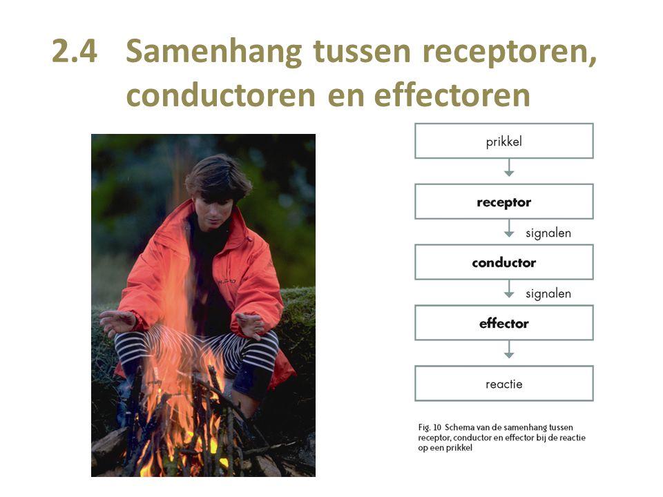 2.4 Samenhang tussen receptoren, conductoren en effectoren