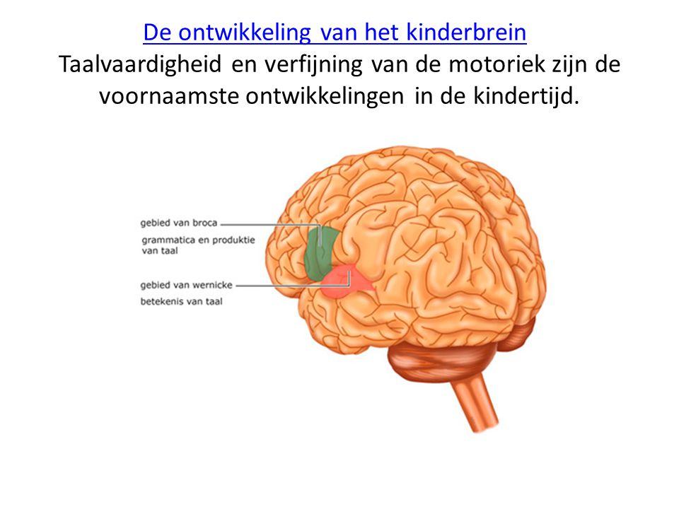 De ontwikkeling van het kinderbrein Taalvaardigheid en verfijning van de motoriek zijn de voornaamste ontwikkelingen in de kindertijd.