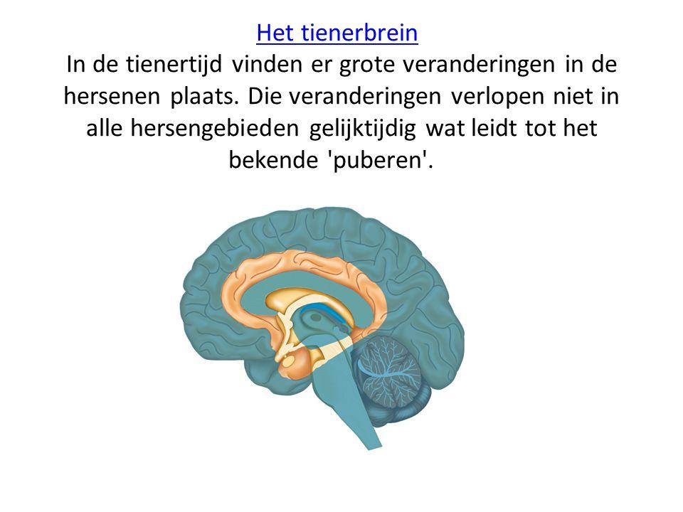 Het tienerbrein In de tienertijd vinden er grote veranderingen in de hersenen plaats.