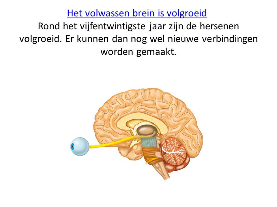 Het volwassen brein is volgroeid Rond het vijfentwintigste jaar zijn de hersenen volgroeid.