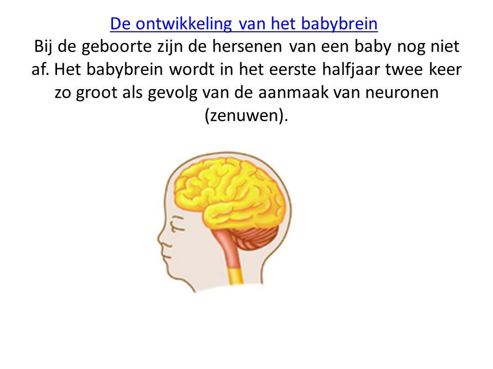 De ontwikkeling van het babybrein Bij de geboorte zijn de hersenen van een baby nog niet af.