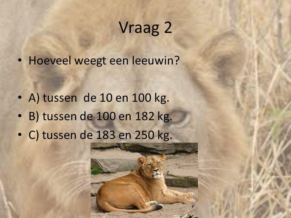 Vraag 2 Hoeveel weegt een leeuwin A) tussen de 10 en 100 kg.