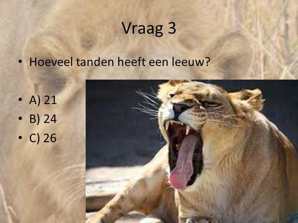 Vraag 3 Hoeveel tanden heeft een leeuw A) 21 B) 24 C) 26