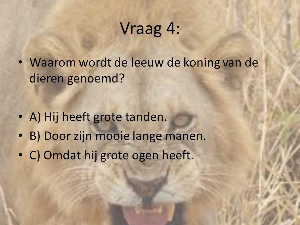 Vraag 4: Waarom wordt de leeuw de koning van de dieren genoemd