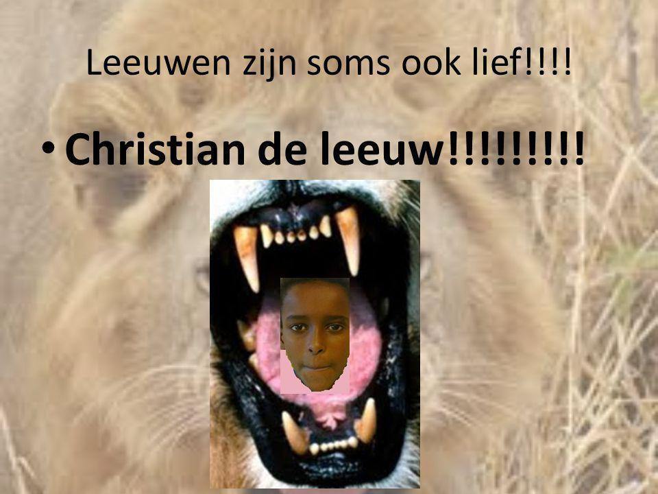 Leeuwen zijn soms ook lief!!!!