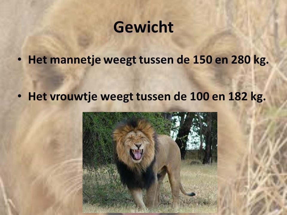 Gewicht Het mannetje weegt tussen de 150 en 280 kg.