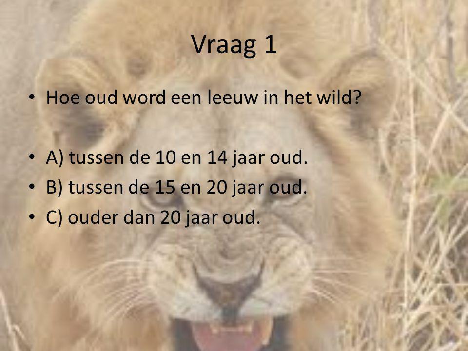 Vraag 1 Hoe oud word een leeuw in het wild