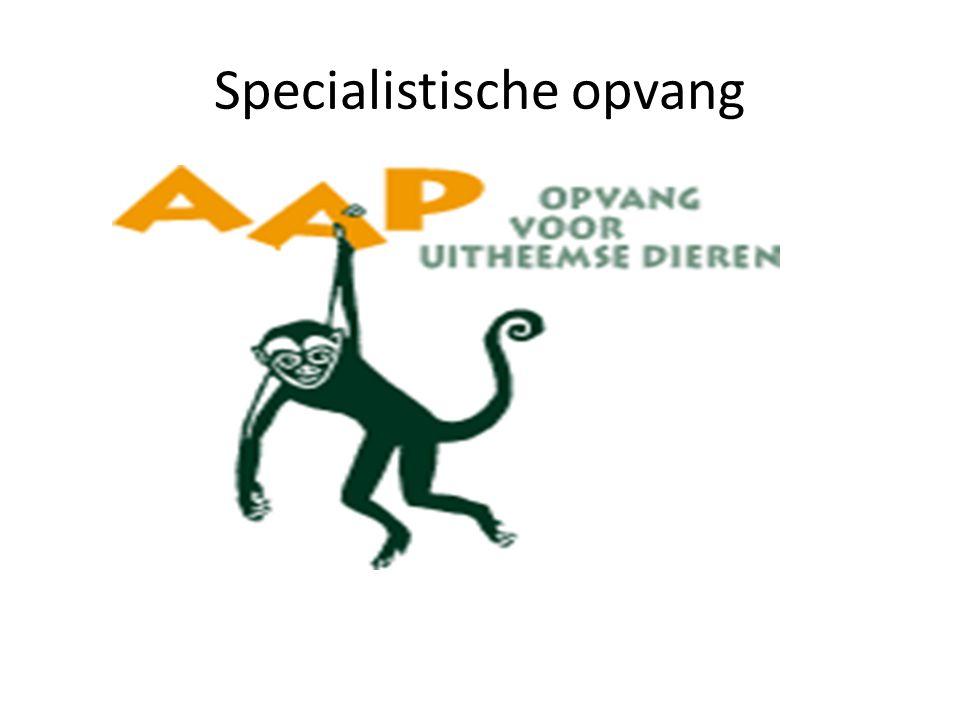 Specialistische opvang