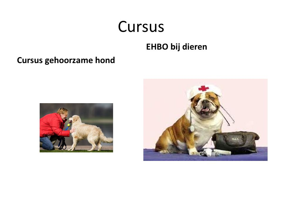 Cursus Cursus gehoorzame hond EHBO bij dieren
