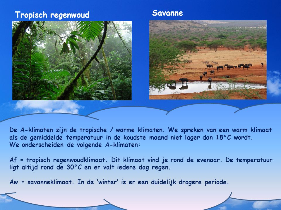 Savanne Tropisch regenwoud