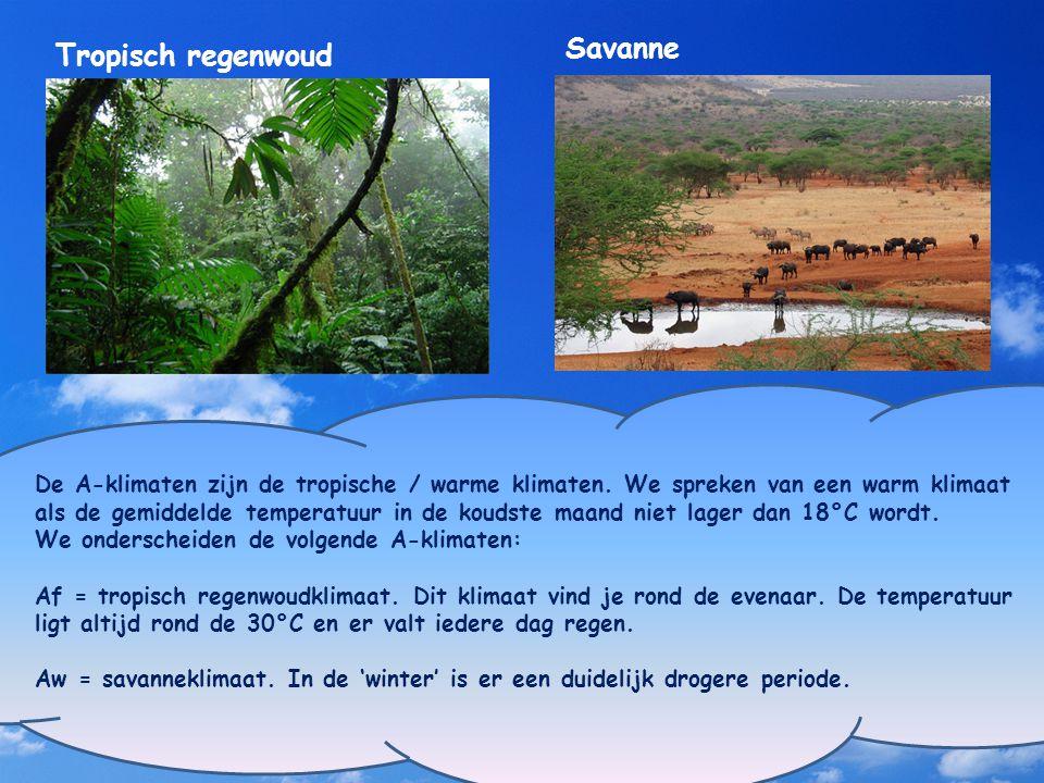 Savanne Tropisch regenwoud