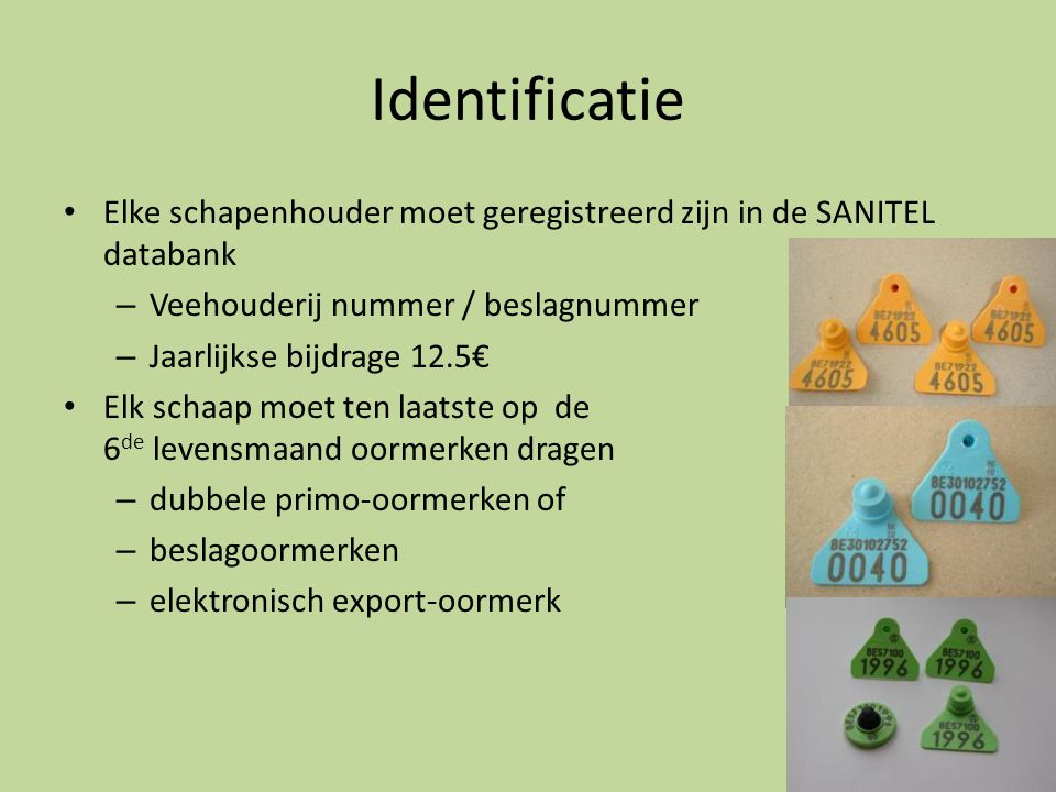 Identificatie Elke schapenhouder moet geregistreerd zijn in de SANITEL databank. Veehouderij nummer / beslagnummer.