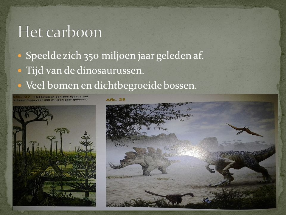 Het carboon Speelde zich 350 miljoen jaar geleden af.
