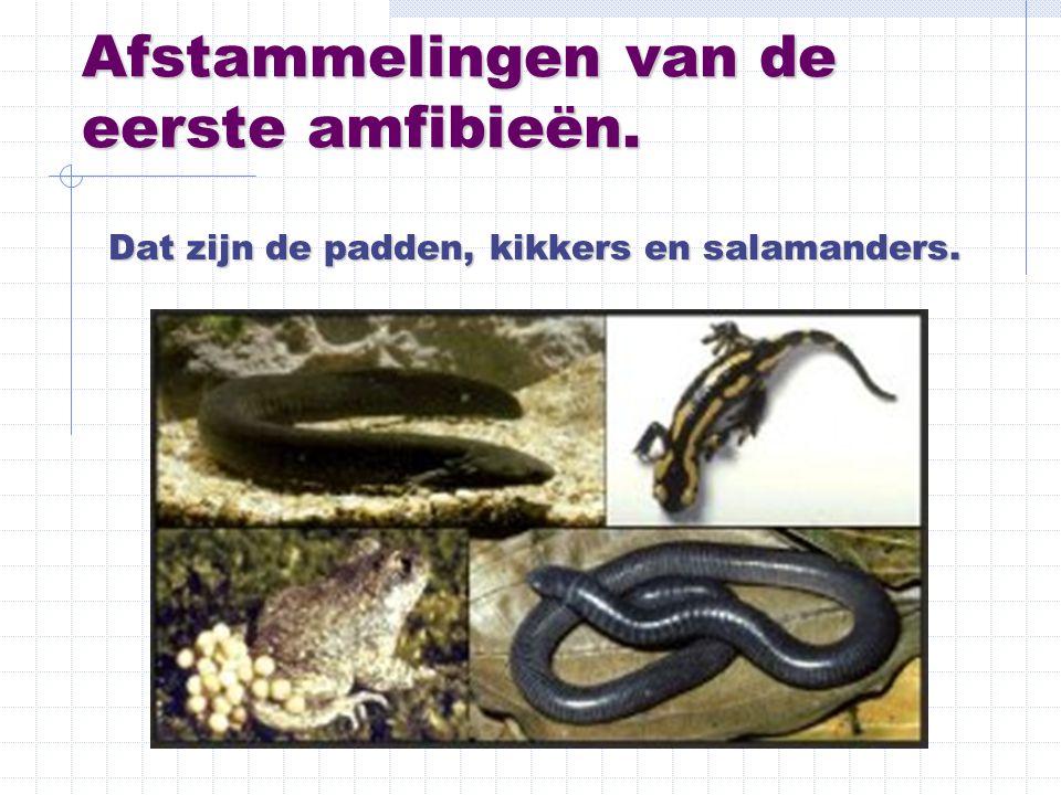 Afstammelingen van de eerste amfibieën.