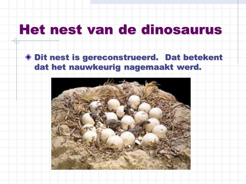 Het nest van de dinosaurus
