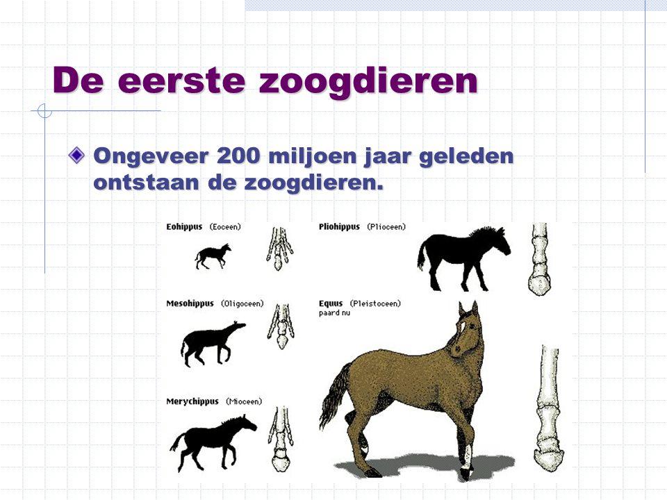 De eerste zoogdieren Ongeveer 200 miljoen jaar geleden ontstaan de zoogdieren.