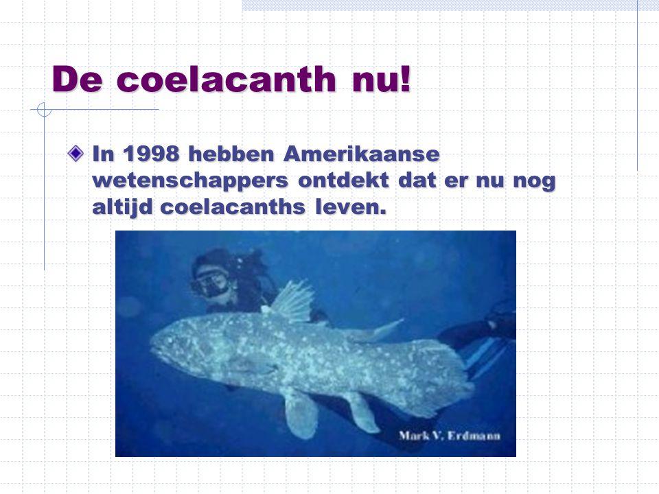 De coelacanth nu.