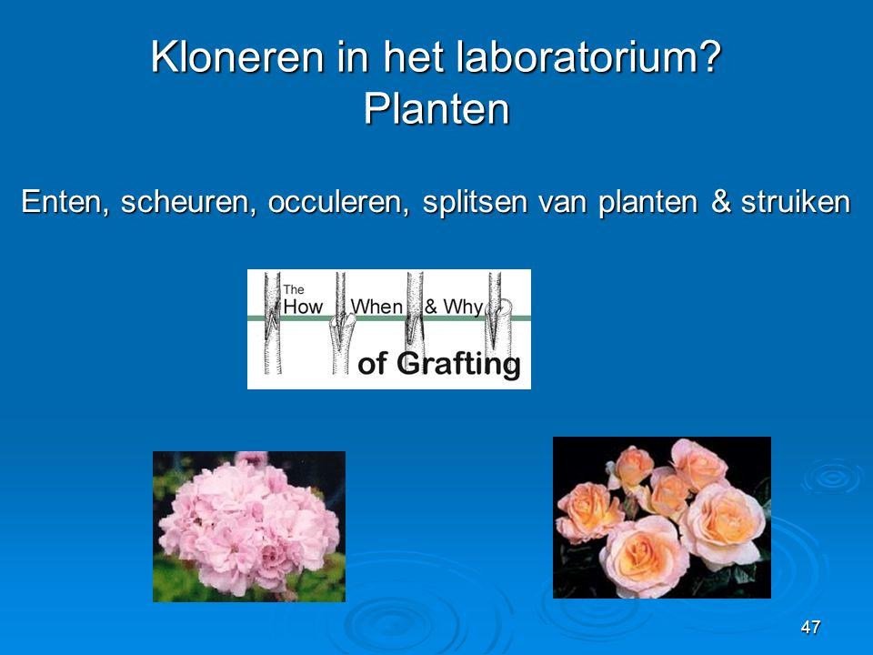 Kloneren in het laboratorium Planten