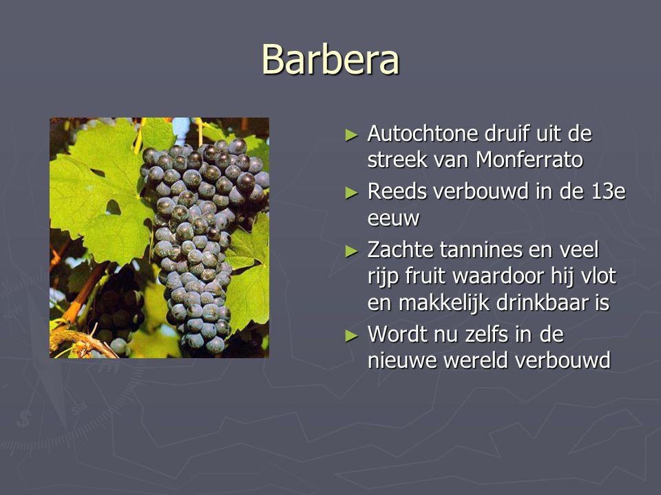 Barbera Autochtone druif uit de streek van Monferrato