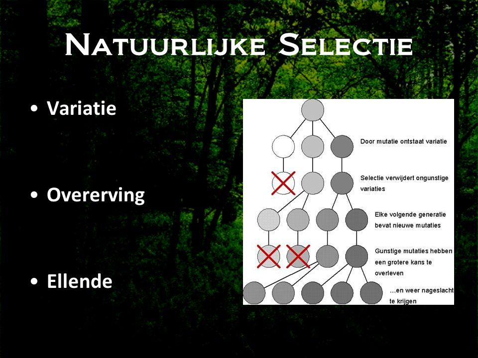 Natuurlijke Selectie Variatie Overerving Ellende