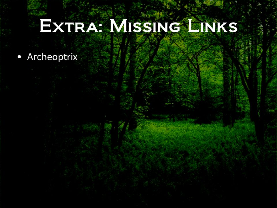Extra: Missing Links Archeoptrix
