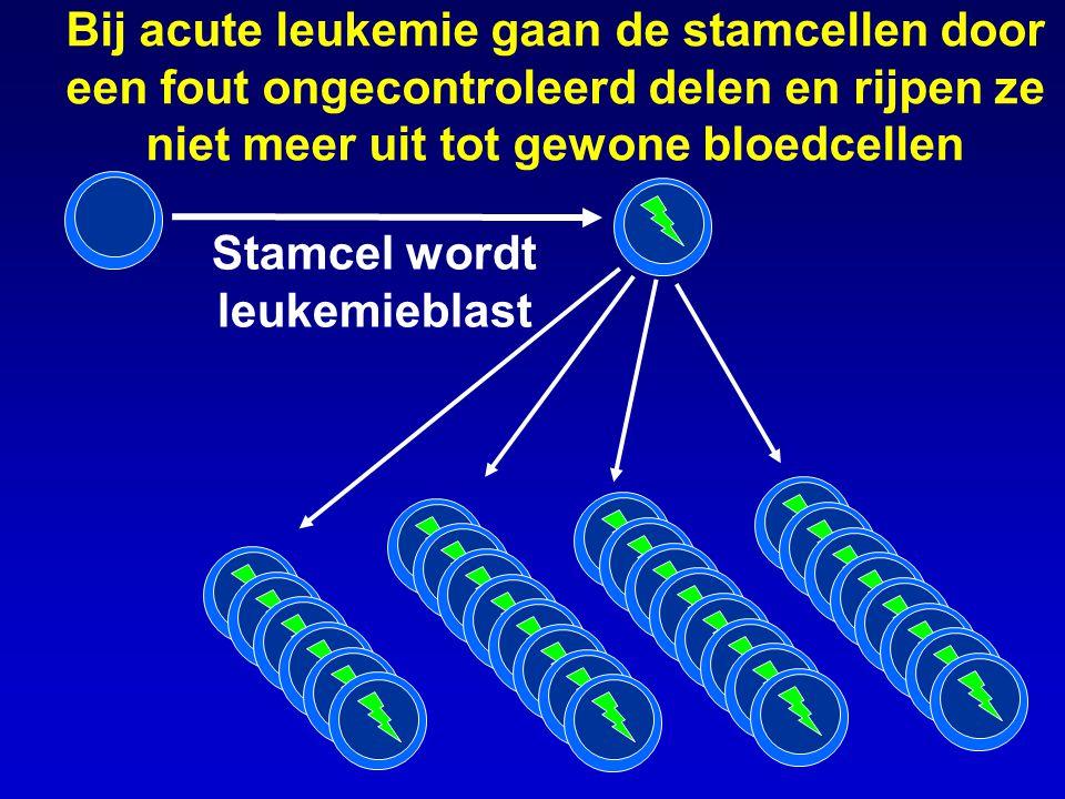 Stamcel wordt leukemieblast