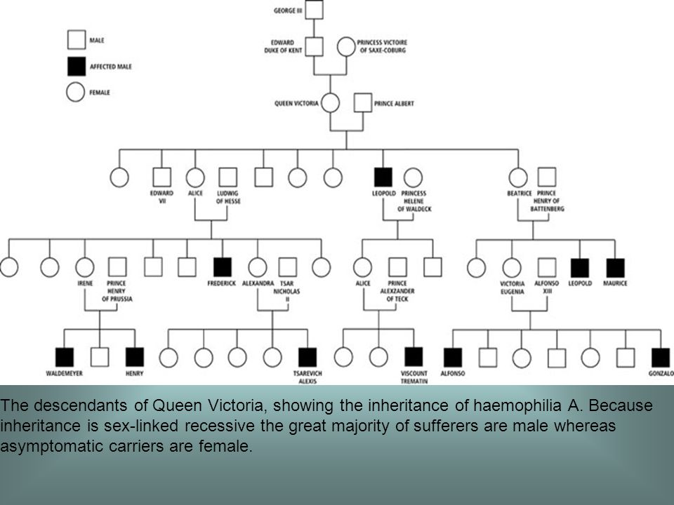 The descendants of Queen Victoria, showing the inheritance of haemophilia A.