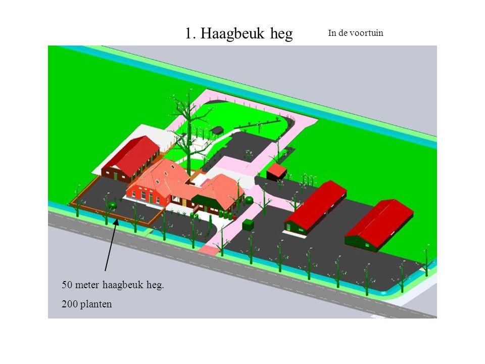 1. Haagbeuk heg In de voortuin 50 meter haagbeuk heg. 200 planten