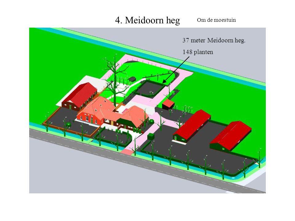 4. Meidoorn heg Om de moestuin 37 meter Meidoorn heg. 148 planten