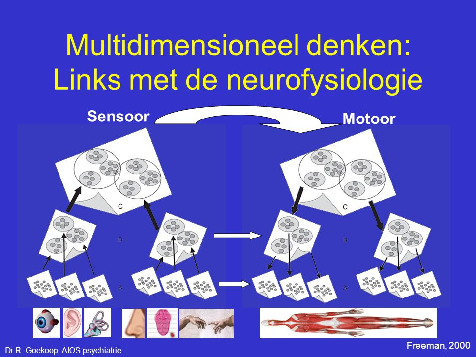 Multidimensioneel denken: Links met de neurofysiologie