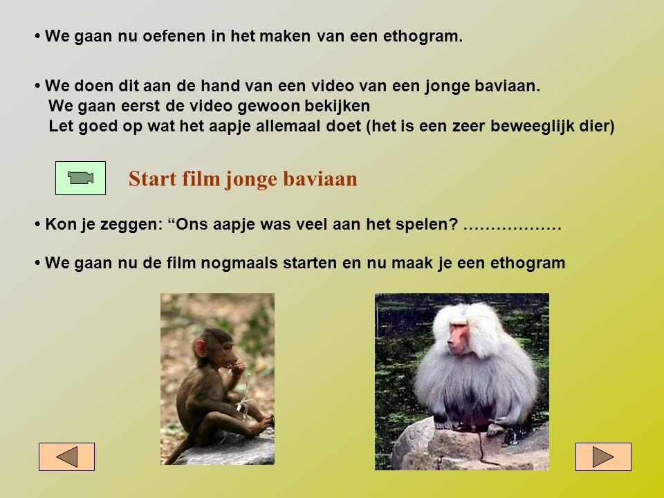 Start film jonge baviaan