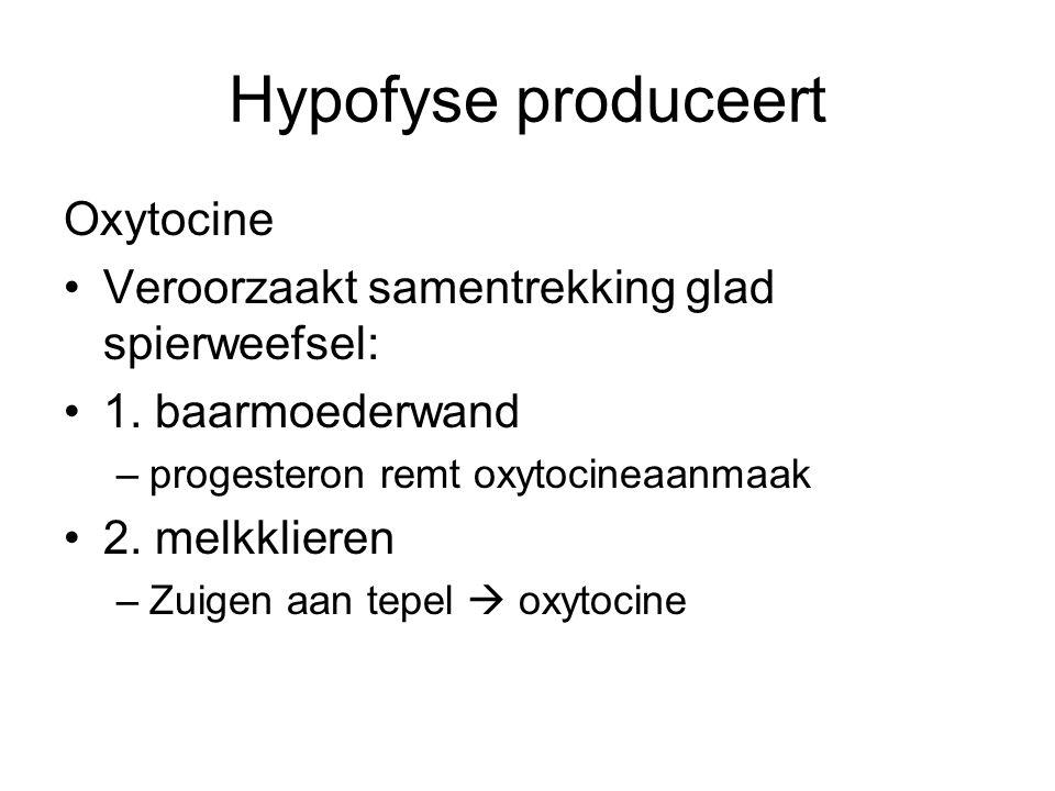 Hypofyse produceert Oxytocine