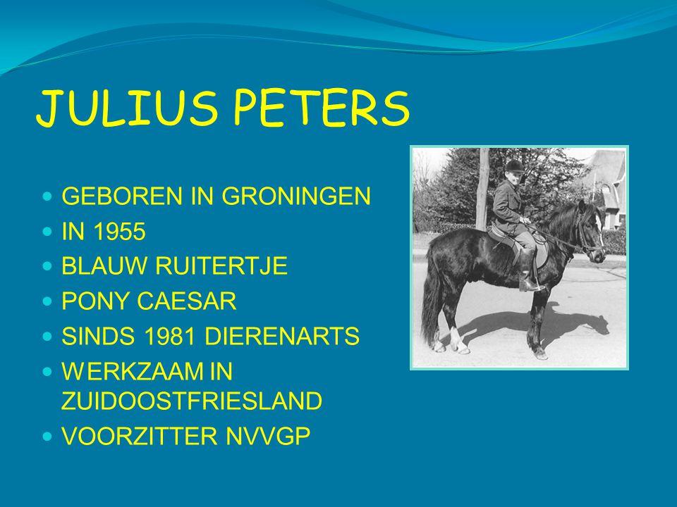 JULIUS PETERS GEBOREN IN GRONINGEN IN 1955 BLAUW RUITERTJE PONY CAESAR