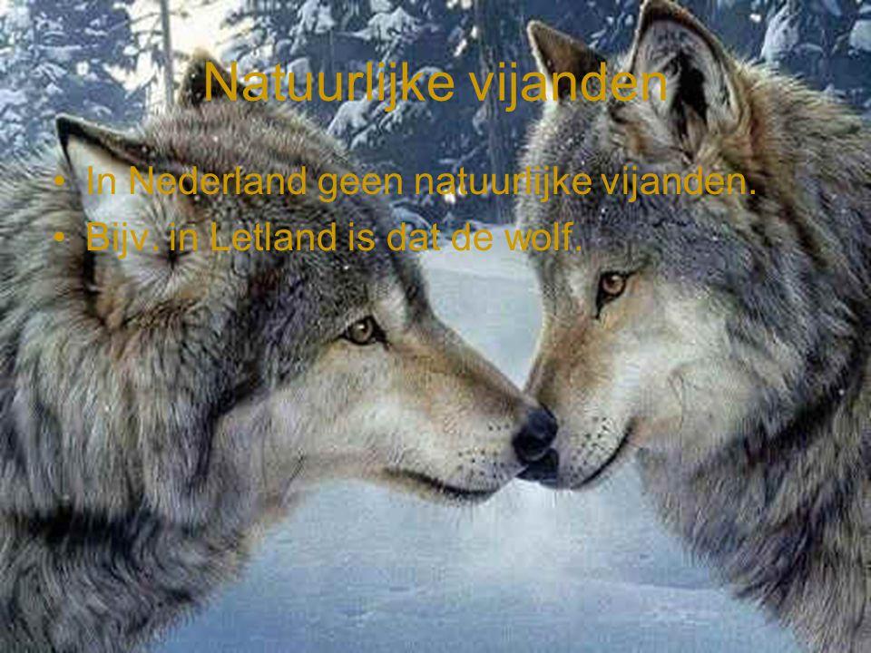 Natuurlijke vijanden In Nederland geen natuurlijke vijanden.