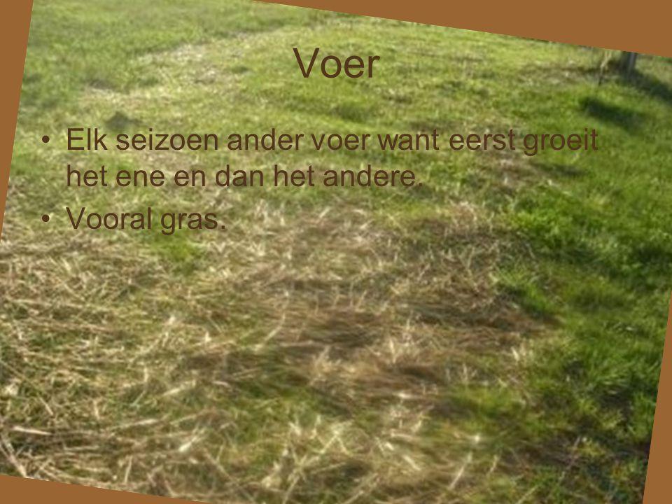 Voer Elk seizoen ander voer want eerst groeit het ene en dan het andere. Vooral gras.