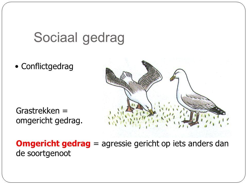 Sociaal gedrag Conflictgedrag Grastrekken = omgericht gedrag.