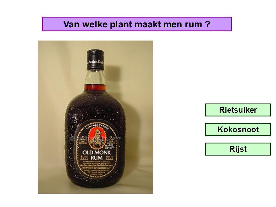 Van welke plant maakt men rum