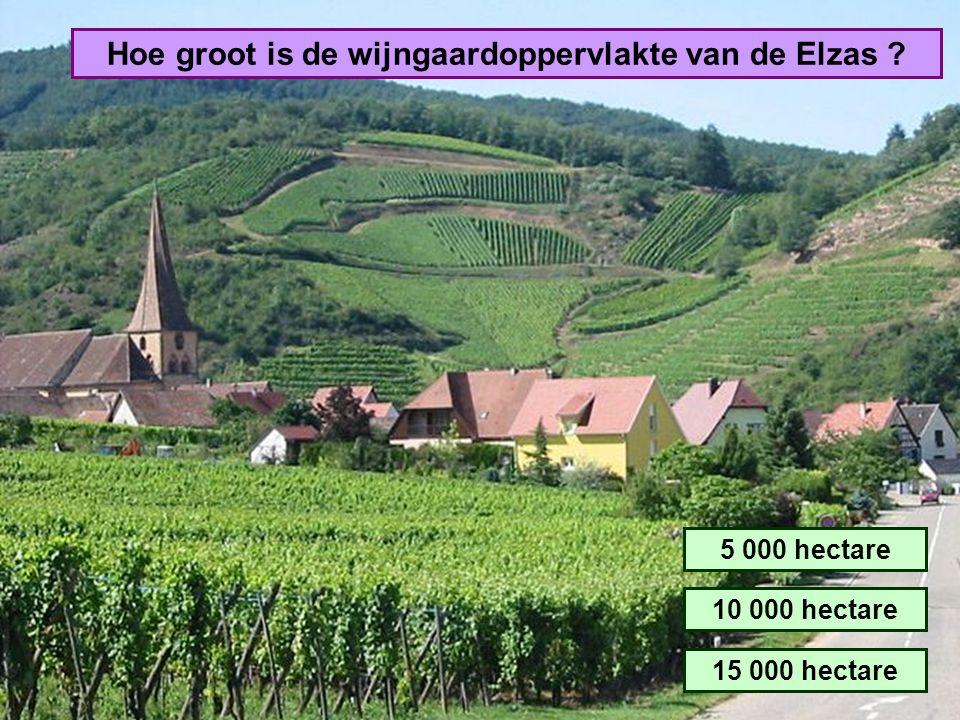 Hoe groot is de wijngaardoppervlakte van de Elzas