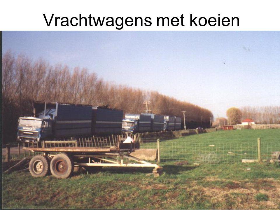 Vrachtwagens met koeien