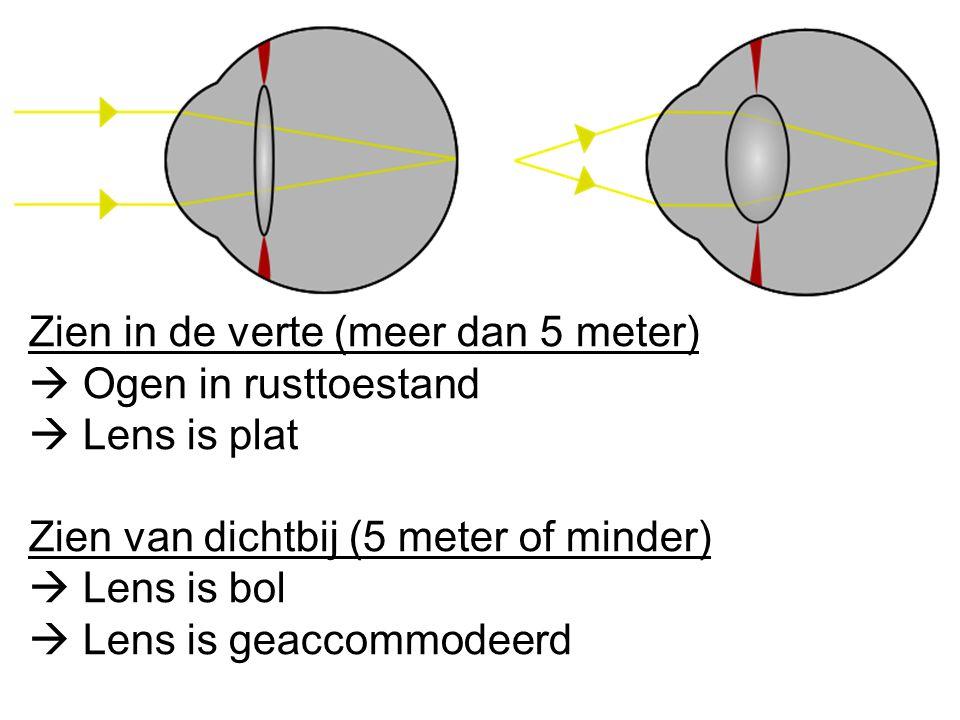 Zien in de verte (meer dan 5 meter)  Ogen in rusttoestand  Lens is plat Zien van dichtbij (5 meter of minder)  Lens is bol  Lens is geaccommodeerd