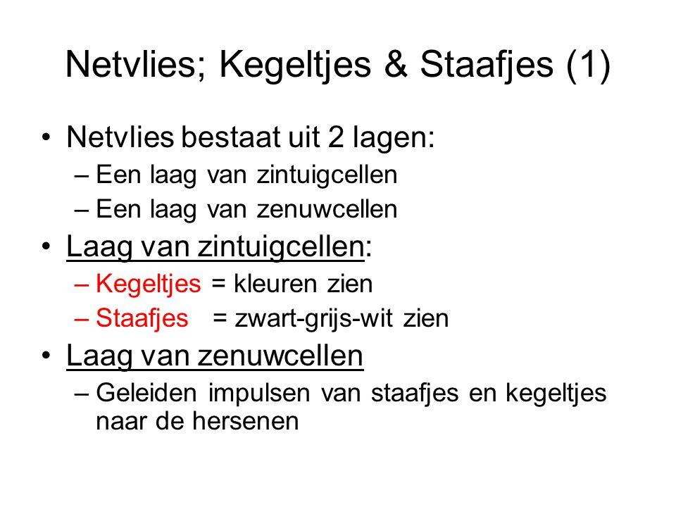 Netvlies; Kegeltjes & Staafjes (1)