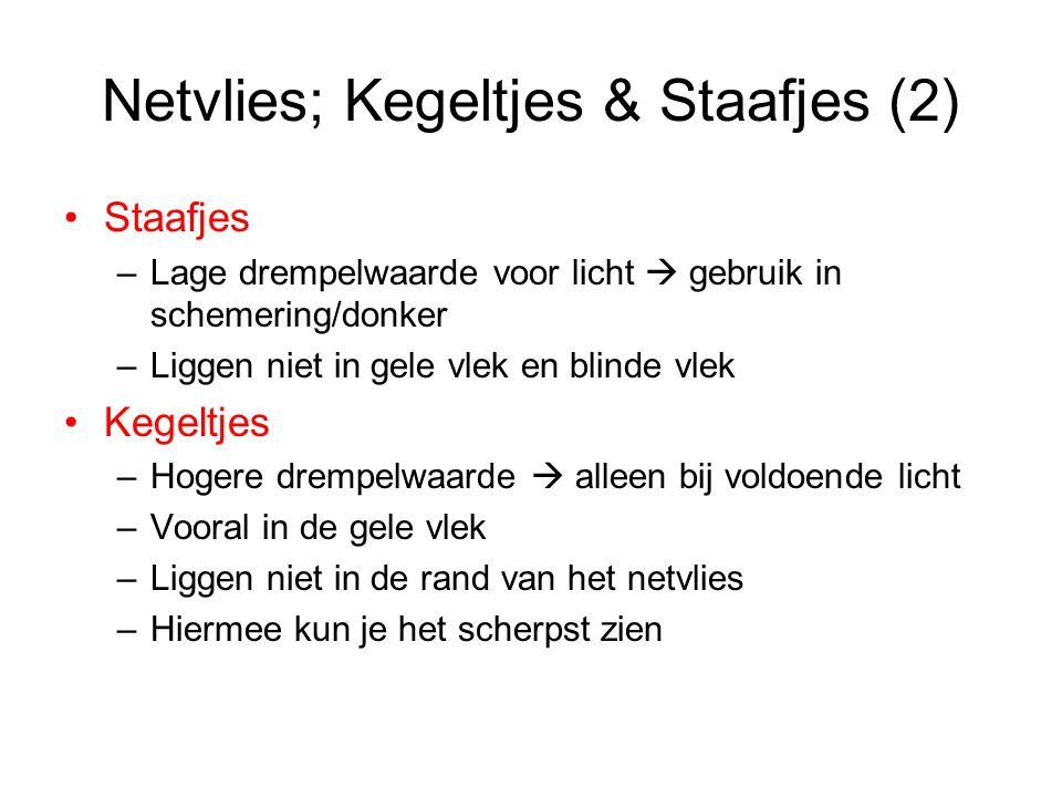 Netvlies; Kegeltjes & Staafjes (2)