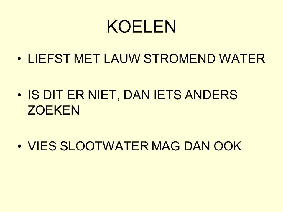 KOELEN LIEFST MET LAUW STROMEND WATER