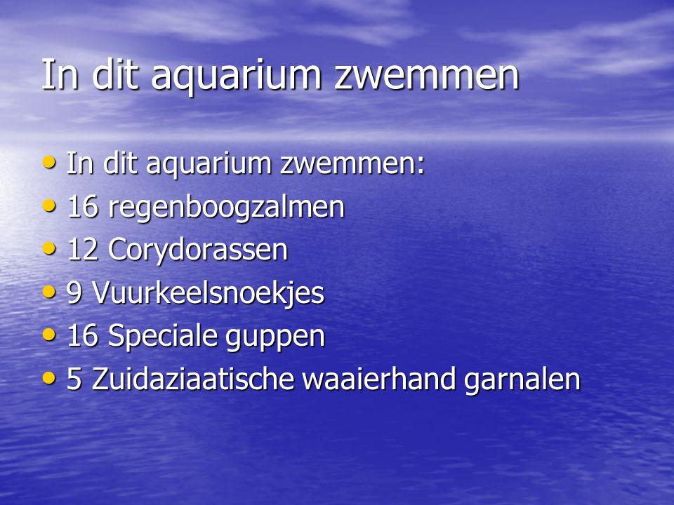 In dit aquarium zwemmen